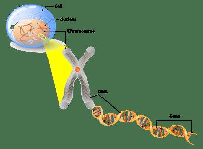 DNA to protien website