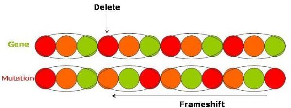 ResizedImage600223 frameshift